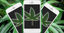 Data Drives The Marijuana Industry with Technology