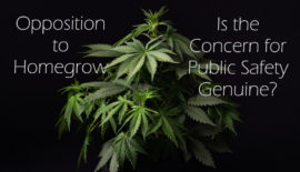 Opposition to Homegrow - Is the Concern for Public Safety Genuine?