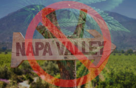 Napa Says No to Cannabis