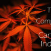 Trends and Companies in the Cannabis Industry